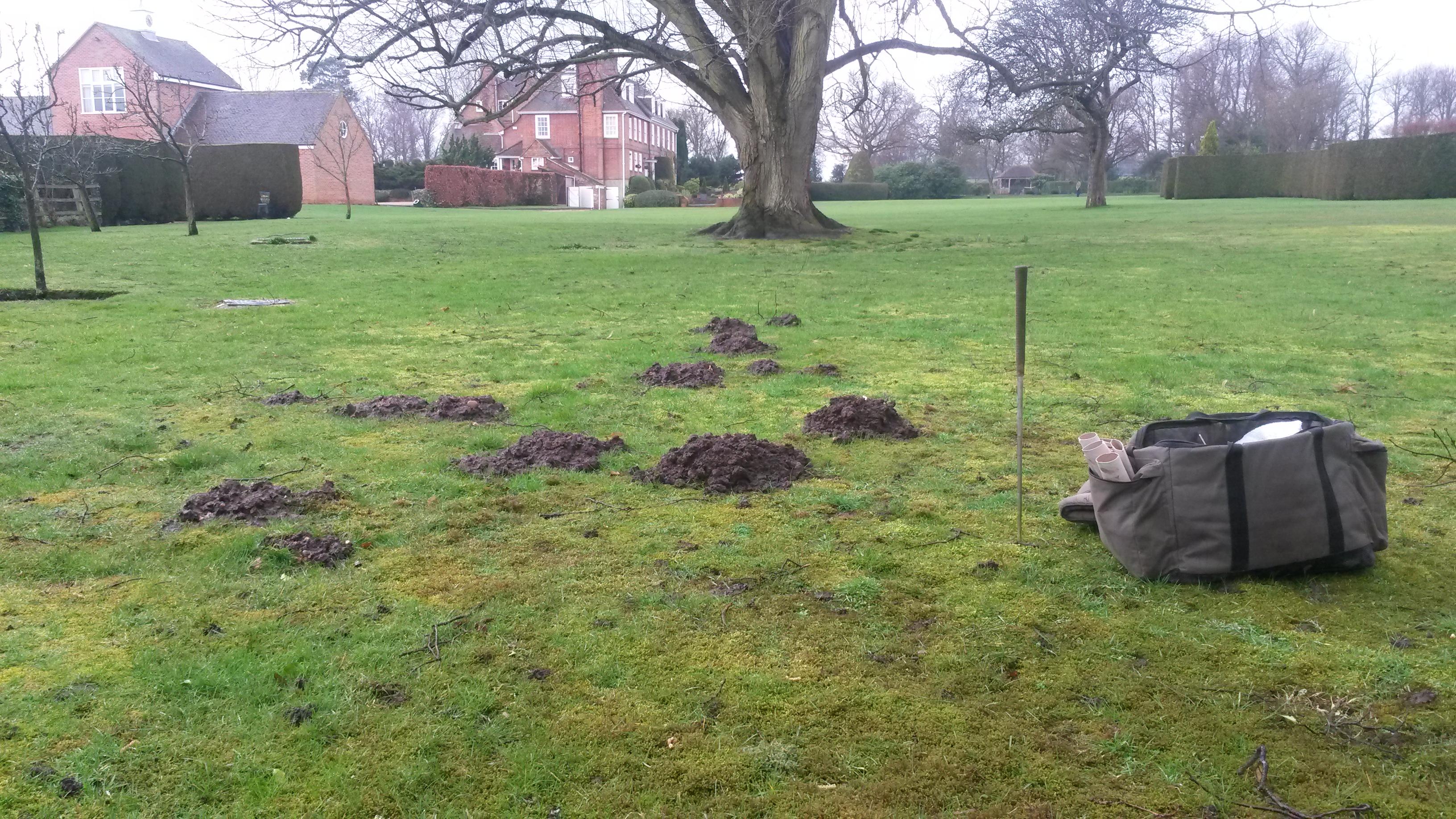 Molehills are a common sight in Surrey
