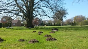 More mole hills in Surrey!