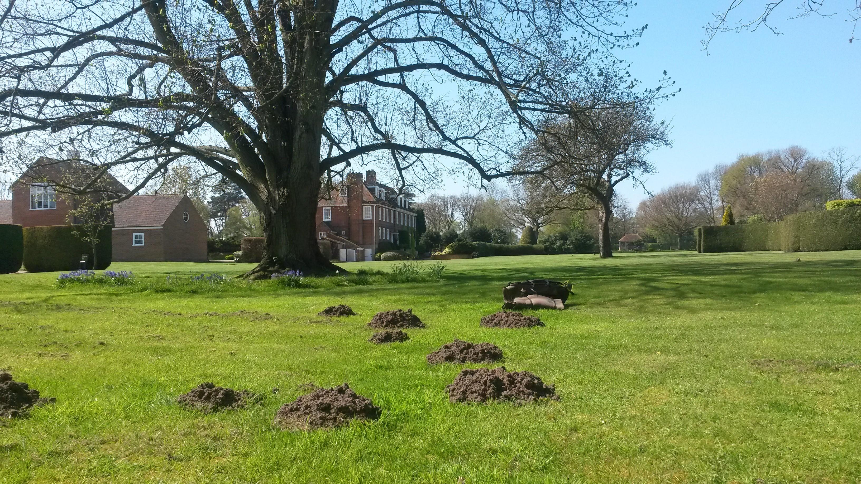 Traditional mole control in Surrey